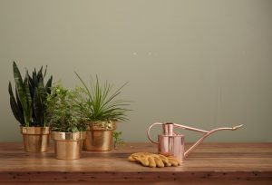 Three potted plants.