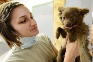 Veterinarian holding a puppy.