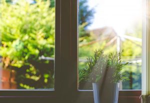 Picture of plant by the window